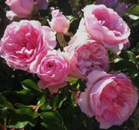 Roseraie du Chatelet