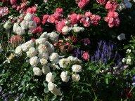 Mein Schoner Garten