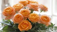 Orange ROMANTICA®