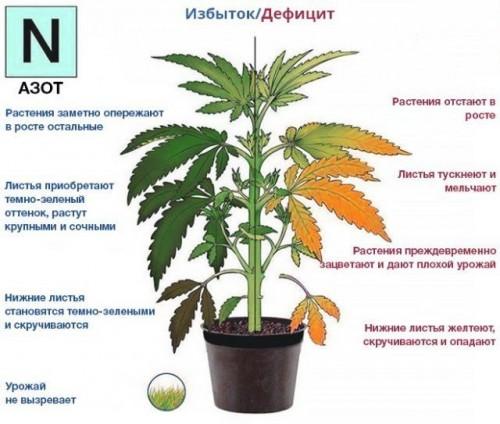 Азот и его источники для растений