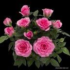 Kordana Classic Felicitas Kordana ®