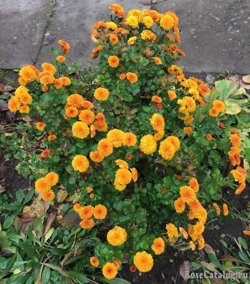 Оранжевая красота