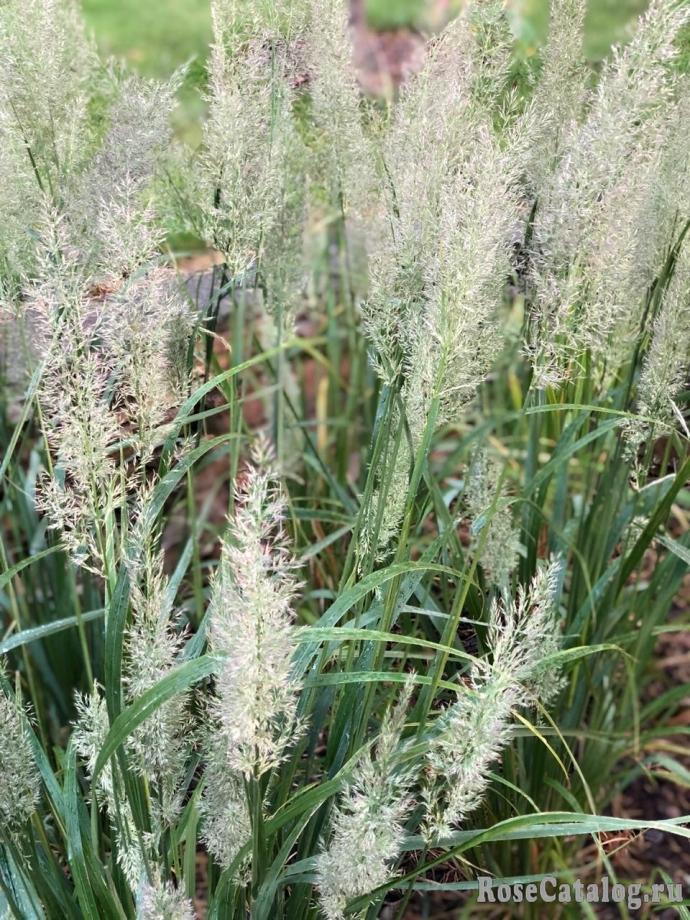 Травы, травы