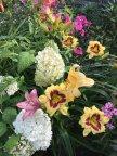 Лето цветет