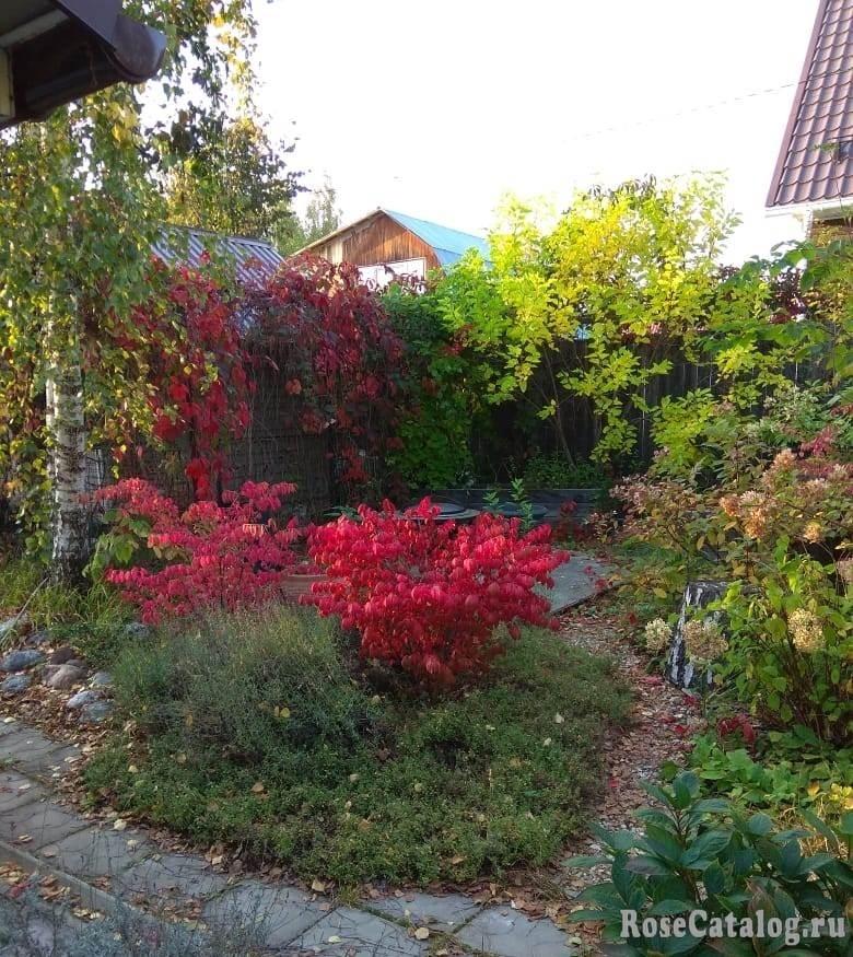 В саду у подруги