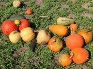 Органическое удобрение поспело