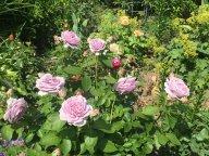 Летний микс с розой Ноблес