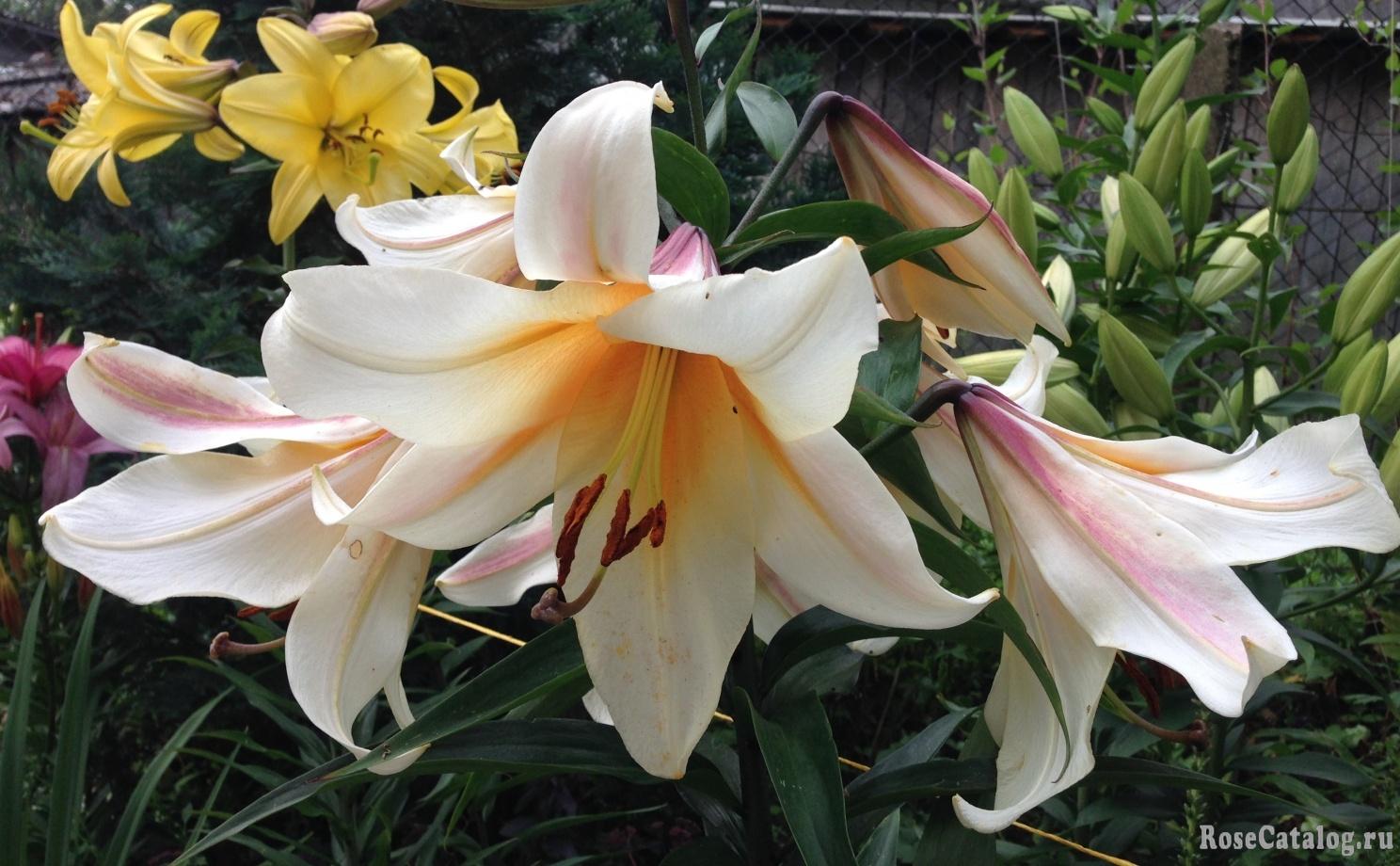 Гарден Эффеэр (Garden Affair)