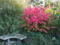 Осень в саду у подруги