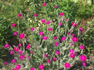 Маленькие радости в большом цветнике