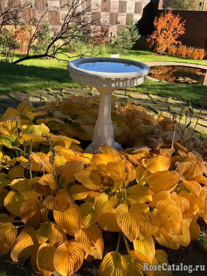 Осень у родственников в саду