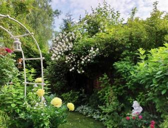 Пион  Bartzella в саду Ангелов