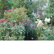 Осень в саду