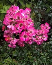 Pink Drift
