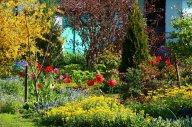 Форзиция, дороникум, алиссум, мускари, тюльпаны