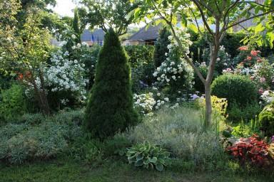 Bouquet Parfait, Novalis. Westerland