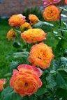 Gartenspass
