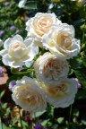 Cream Abundance
