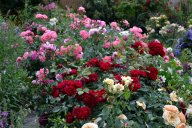 Malicorne  и Mein schoner Garten