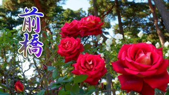 Сад роз Сикишима осенью 2020