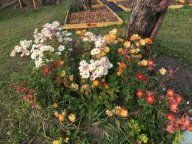 Хризантемовый микс