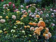Правят бал цветы теплых оттенков