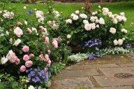 Розарий в розово белых тонах