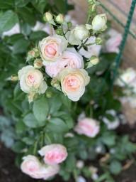 Розовое настроение