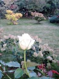 Сад начала октября.