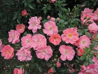 цветочки в начале цветения