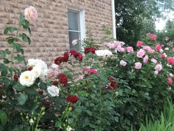 розы Поулсен