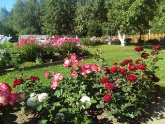 Бело-красный розарий