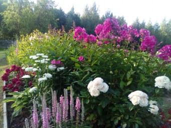 Alberich, Bouquet Parfait