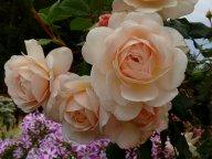 Крокус роза, флокс Миша