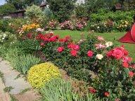 Розовая поляна